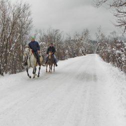 Ježa konjev in vožnja z lojtrnikom-00009