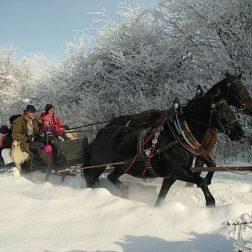 Ježa konjev in vožnja z lojtrnikom-00010