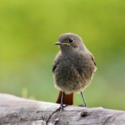 Opazovanje ptic-00004