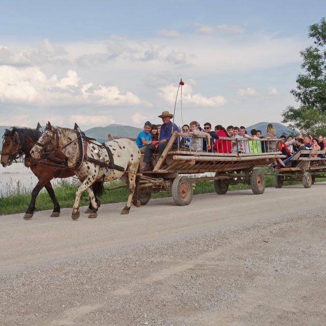 Ježa konjev in vožnja z lojtrnikom