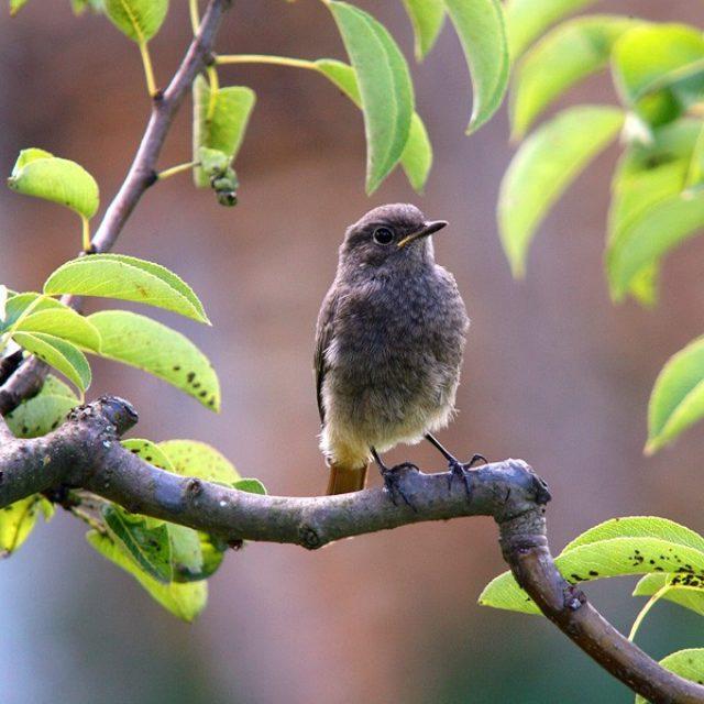 Opazovanje ptic