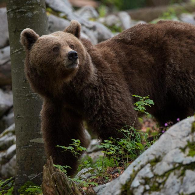 Un giorno con l'orso