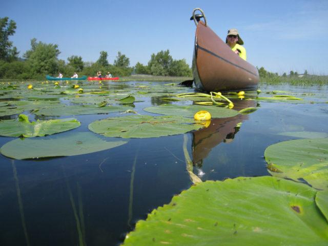 Safari in canoa – Jamski zaliv, 1 giorno