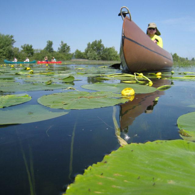 Kanu safari – Jamski zaliv, 1 dan